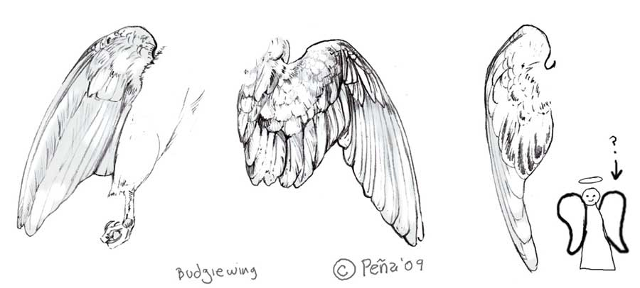 1000+ images about Wings on Pinterest   Wings, Birds and Angel  Folded Bird Wings